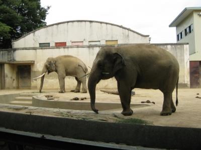 象のマックとズゼ