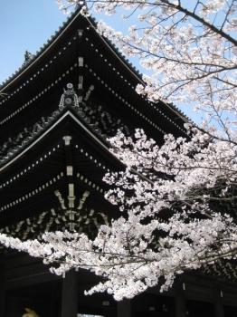知恩院三門と桜 2010.4.4
