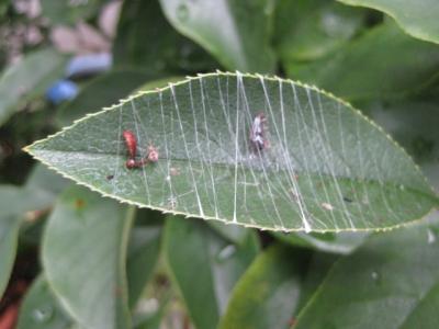 簡単な蜘蛛(くも)の巣