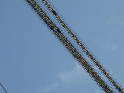鳥害防止材料が取り付けられた電線 拡大