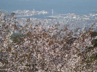 天覧台から大阪湾を眺望
