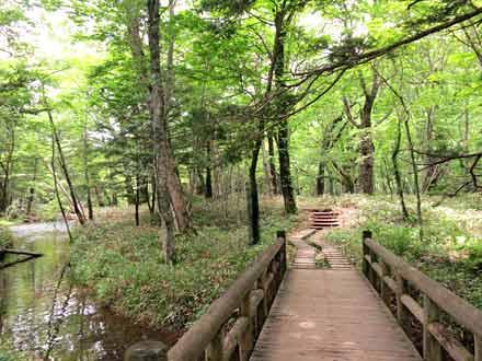 湯滝→泉門池 遊歩道
