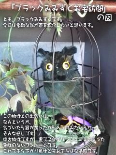 籠の中の黒みみずく