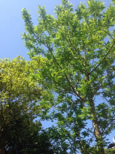鎌倉古民家スタジオSeeSaw-シーソーは豊かな自然の中にあり、とても気の流れの良い場所です。