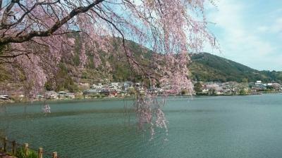 野守桜.jpg