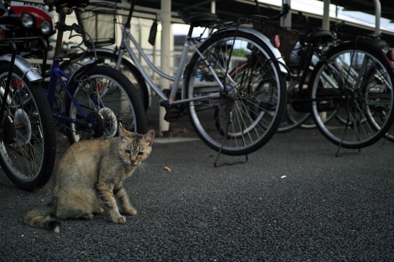 駅前駐輪場.JPG