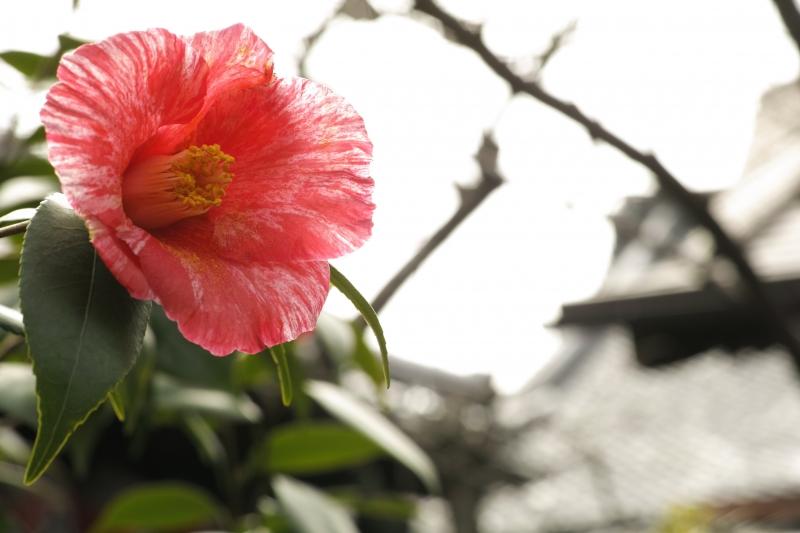 狭き庭.JPG