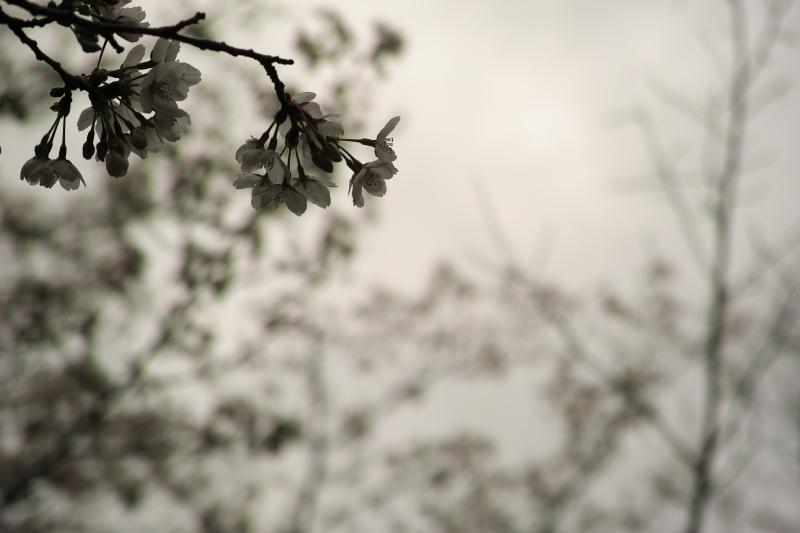 dark cherry.JPG