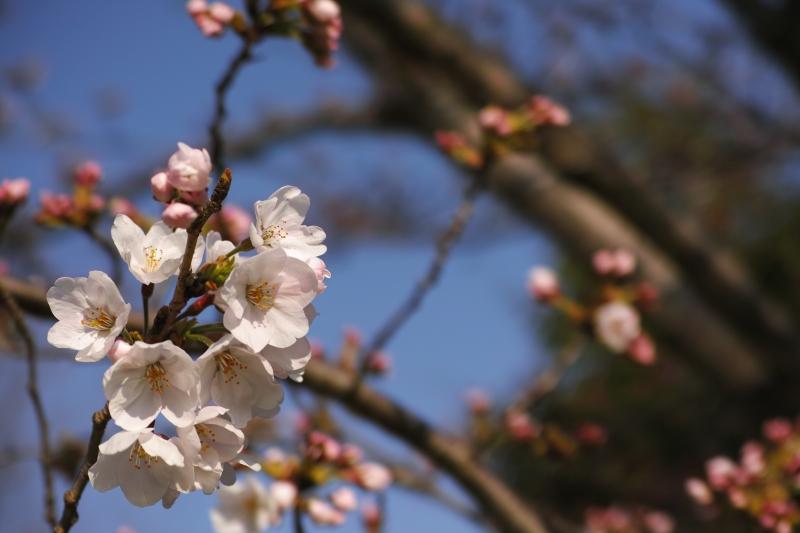 千本(ちもと)の花の.JPG
