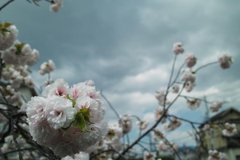 ジナイダンの春.JPG
