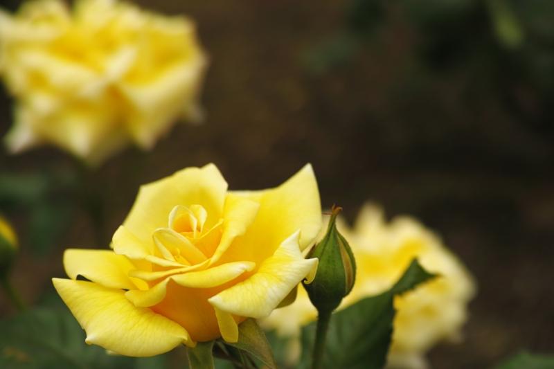 pastel yellow.JPG