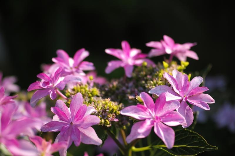 偽の花、真の花.JPG