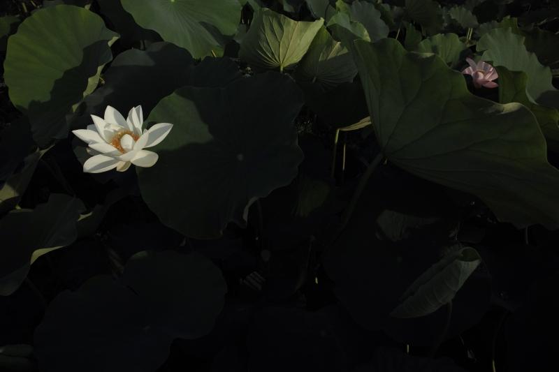 漂い花.JPG