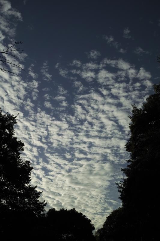 鯖雲.JPG