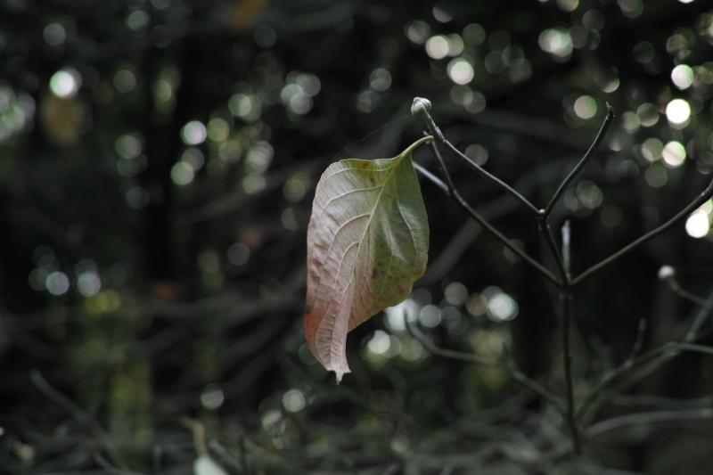 葉ひとつ実ひとつ.JPG