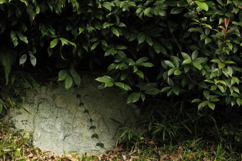 現状側、藪の下の仏.JPG