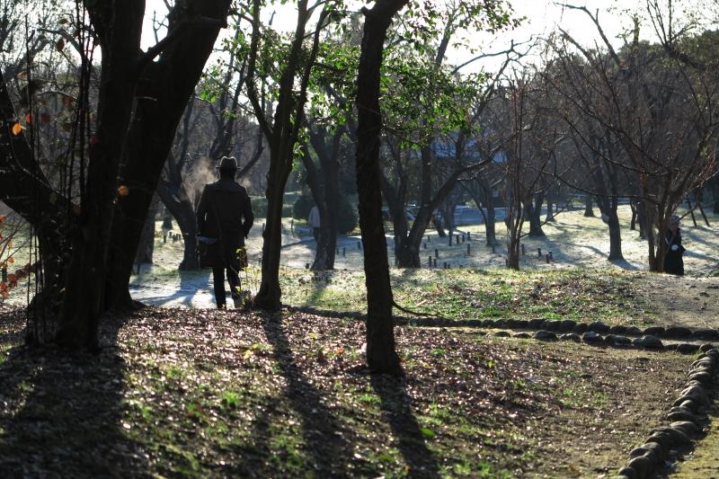冷たい朝の散歩道.JPG