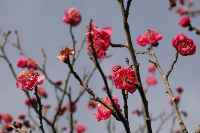 乱れ咲き.JPG