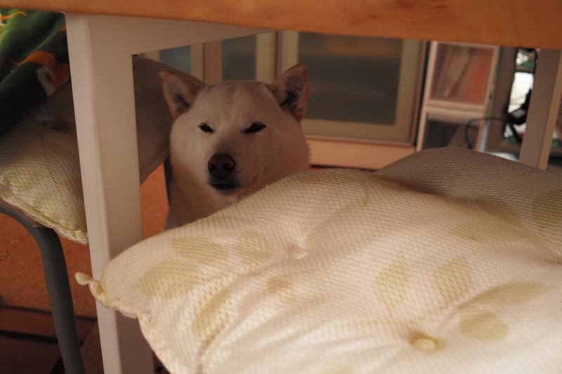少し眠いの.JPG