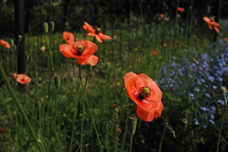 扁平な花弁.JPG