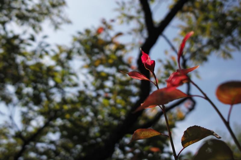 紅い葉.JPG