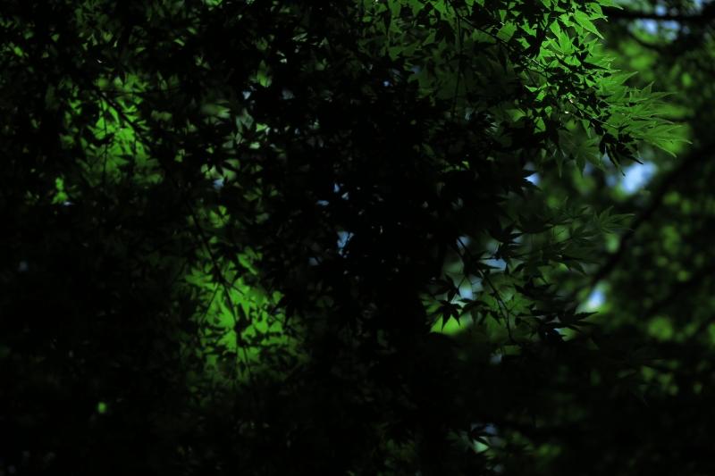 木の間蔭.JPG