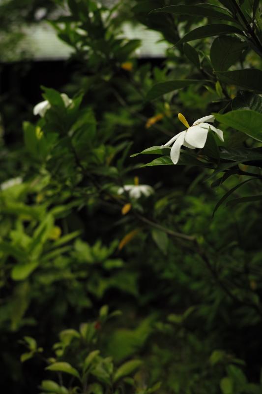 根津庭園.JPG