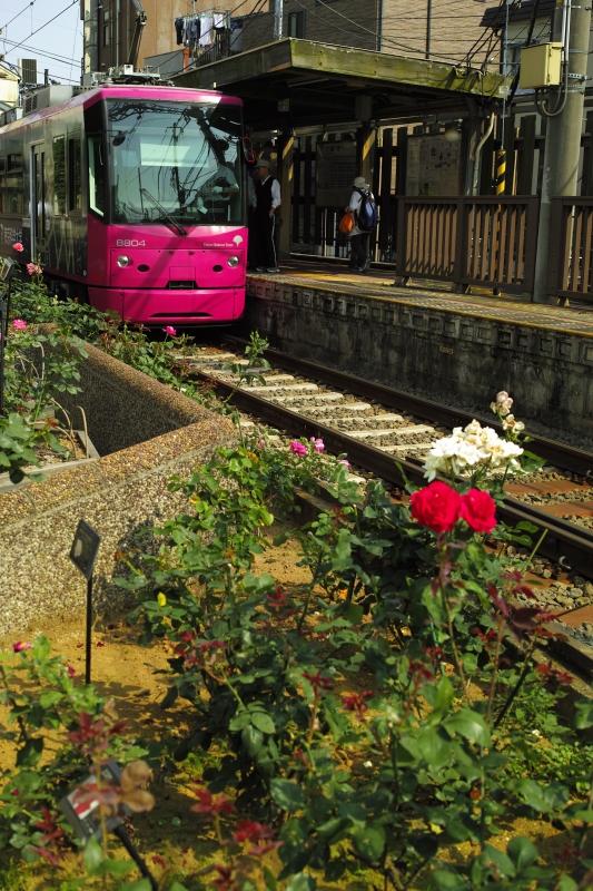 薔薇咲く駅にて.JPG