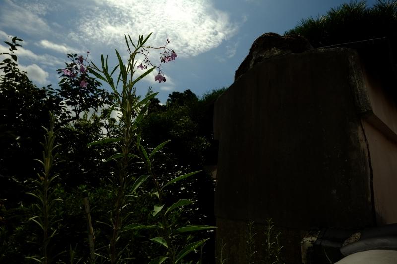 廃園の庭.JPG