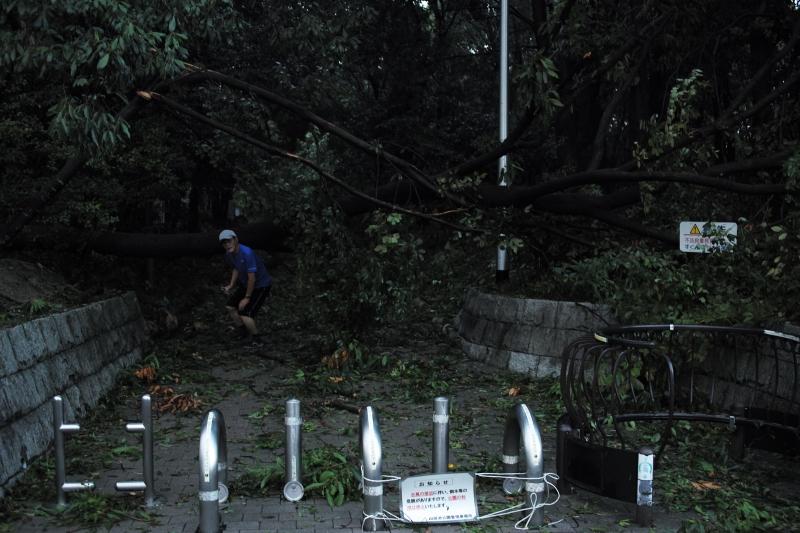 樹木倒壊.JPG