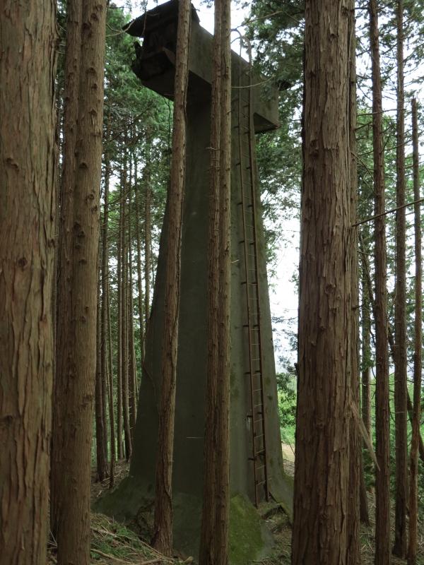 杉木立の中の中間支柱.JPG