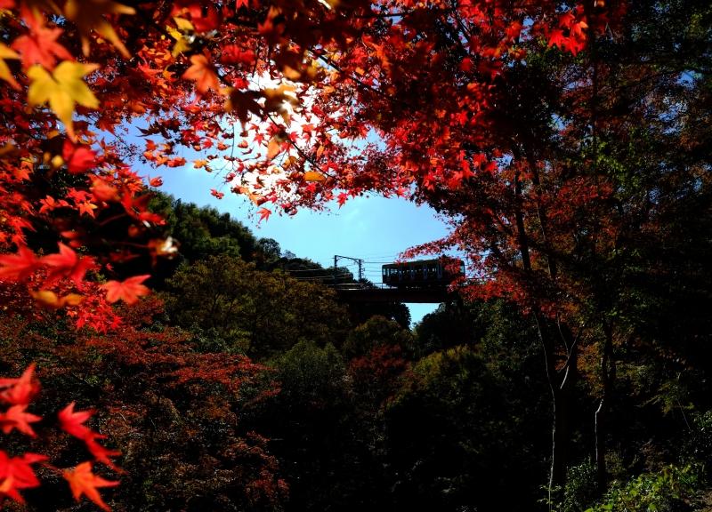 男山山上へ.JPG
