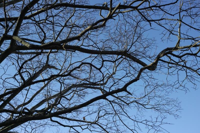 もちもちの樹.JPG