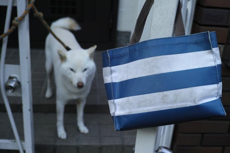 お散歩バッグと白い犬.JPG
