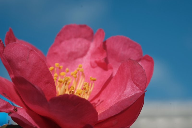 花弁の中.JPG