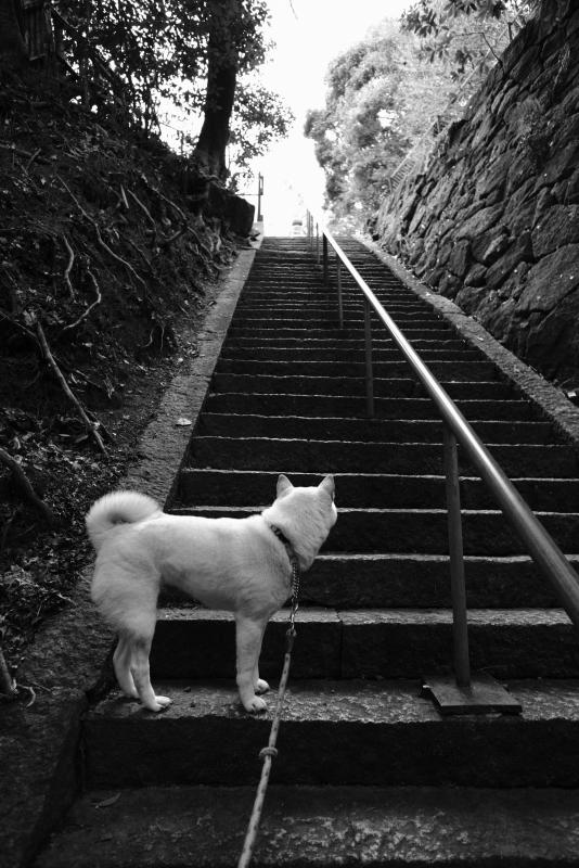 石段途中.JPG