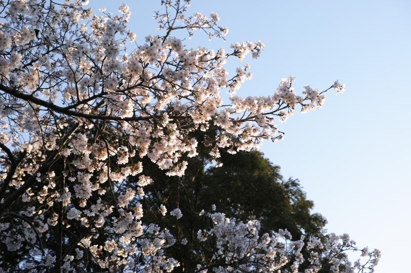 倉治の朝.JPG