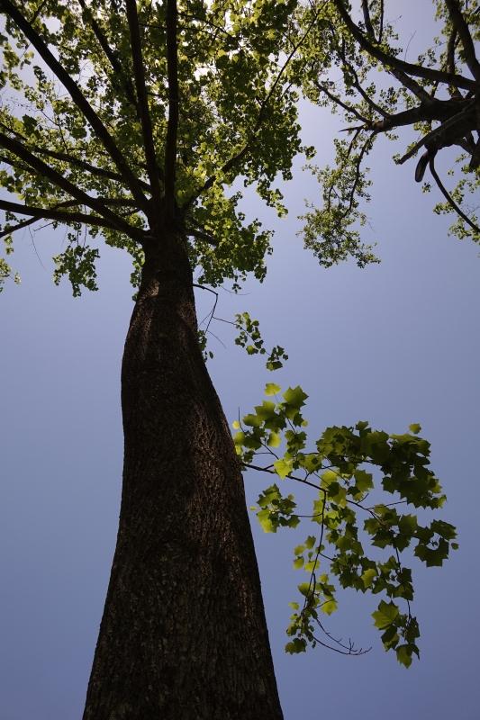 ものがたりの樹.JPG