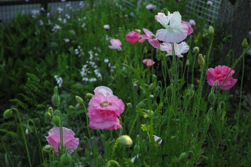 花に潜む.JPG