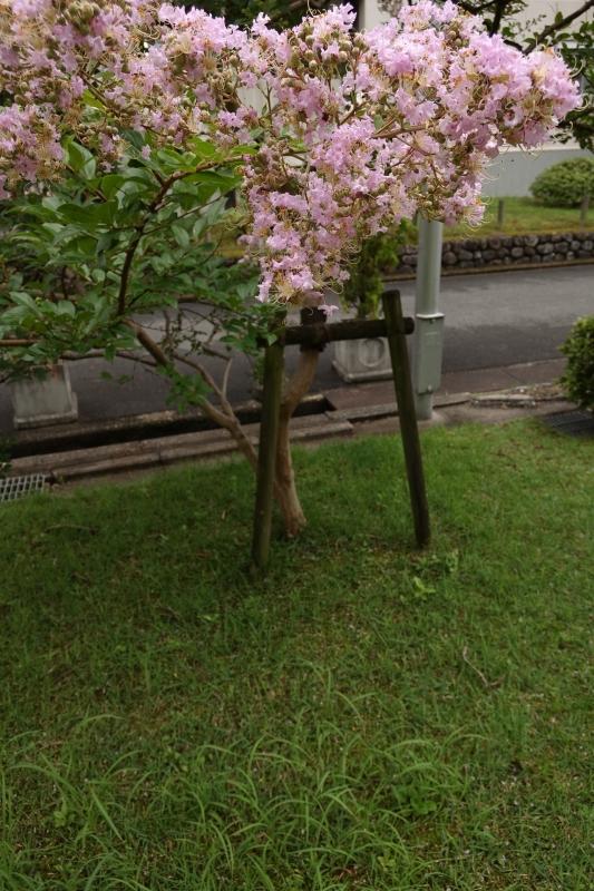 マンション隠しの花.JPG