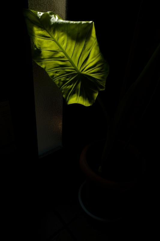 玄関土間の闇.JPG