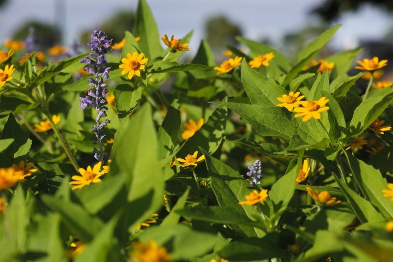 異なる花.JPG