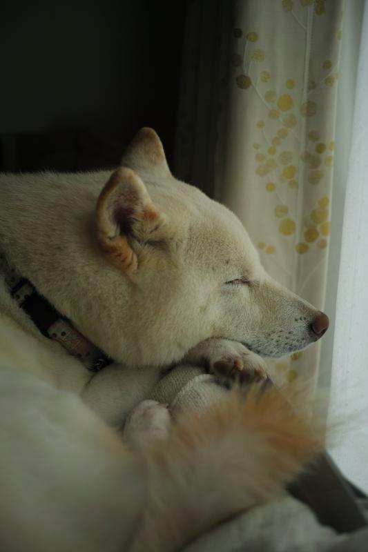 睡魔.JPG