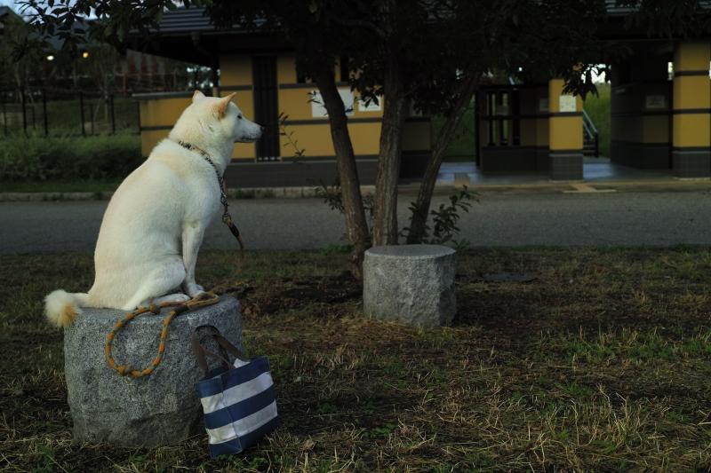 狛犬だってなれるモン.JPG