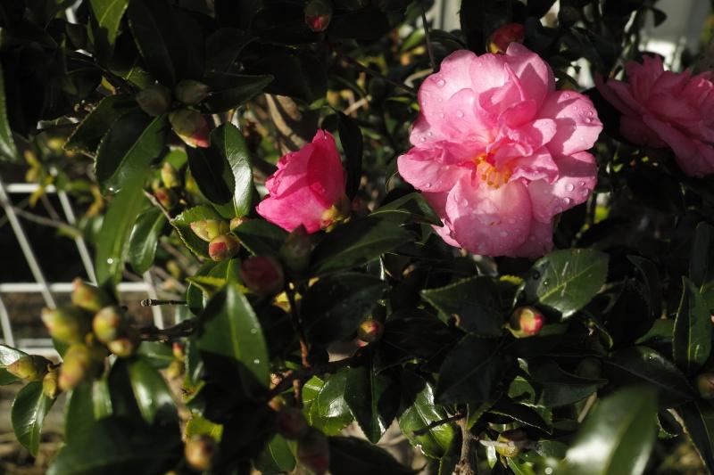 花の露.JPG