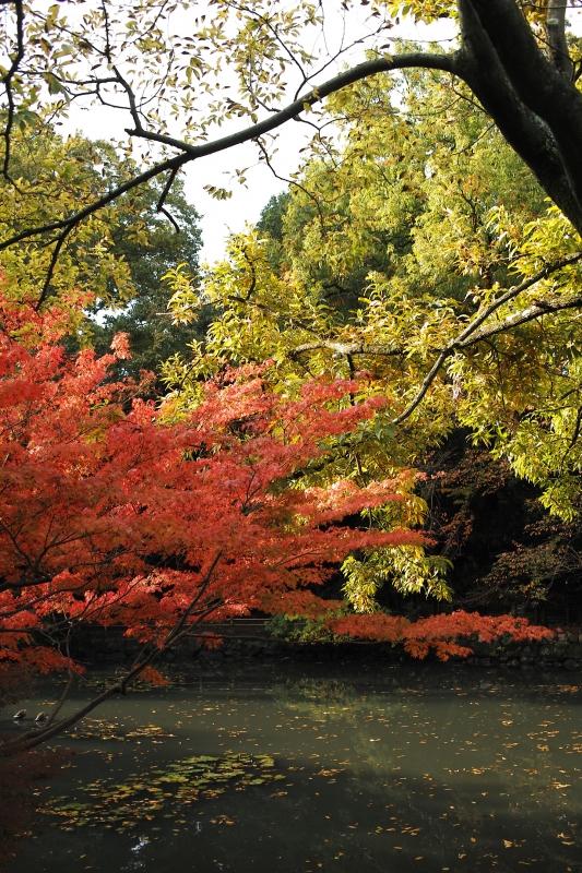 睡蓮池の秋.JPG