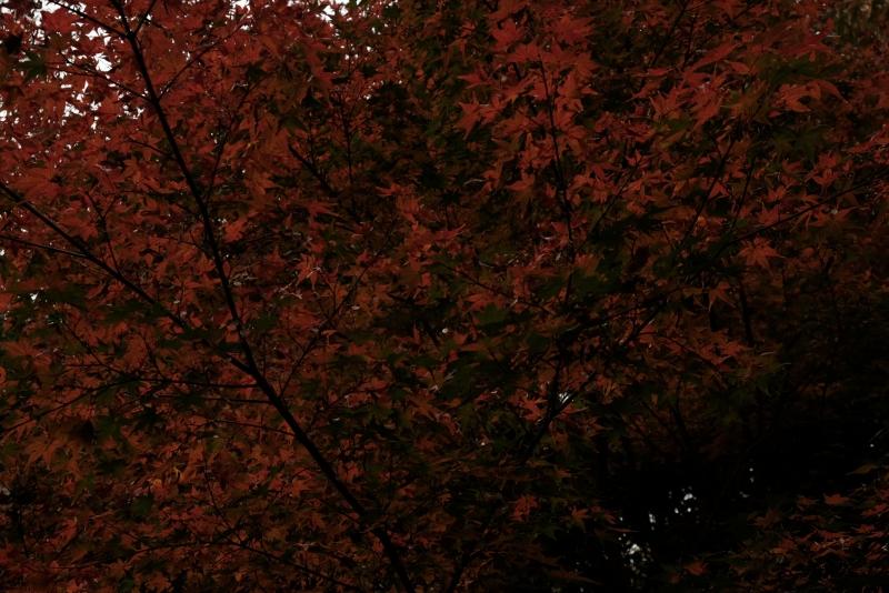 紅葉陰影.JPG