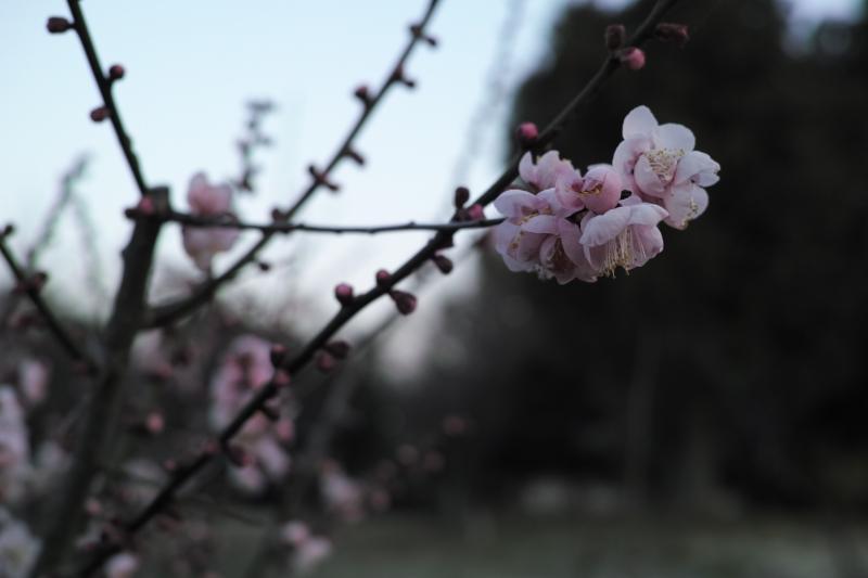 立春過ぎし寒の入り