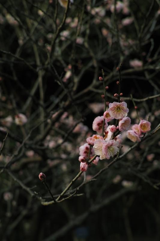 花木園の闇