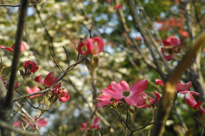 揺蕩(たゆた)う花